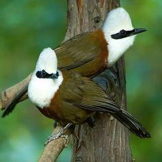 Most Beautiful Birds, Pretty Birds, Love Birds, Exotic Birds, Colorful Birds, Cute Animal Pictures, Wild Birds, Bird Watching, Bird Feathers