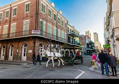 One of most popular entertainments in New Orleans - tour around French quarter in a mule-drawn carriage Stock Photo