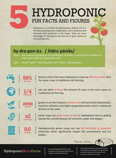 Infographic showing 5 Hydroponic Fun Facts and Figures