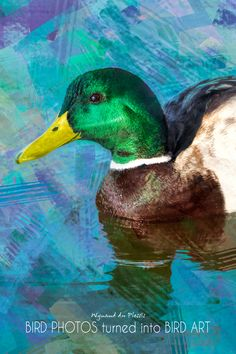 Bird Photos turned into Bird Art - printed on stretched canvas - embellished with clear matt texture to enhance the digital brush strokes. Bird art by Wynand du Plessis Abstract Photos, Abstract Canvas, Duck Bird, Photo To Art, Art Prints Online, Bird Artwork, Mallard, Stretched Canvas, Brush Strokes