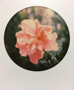Polaroid frame | We Heart It | overlay, polaroid, and ...