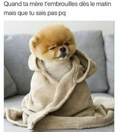 Jiff Pom is so stinking cute! Cute Baby Animals, Animals And Pets, Funny Animals, Funny Dogs, Funny Memes, Cartoon Memes, Jiff Pom, Rage Comic, Very Cute Dogs