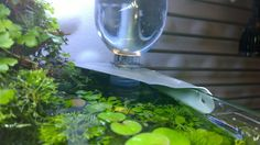 Auto-Top Off for my Nano - easy, low-tech found-materials, with video! - The Planted Tank Forum Fish Tanks, Ocean Life, Long Weekend, White Wine, Alcoholic Drinks, Tech, Easy, Navy Life, Aquariums