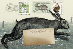 Rabbits - new trend for tees - centre placement and front AOP.....  mailart hare by junikon