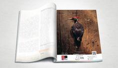 Fox Idea Dergi Reklamı - Silüet Tanıtım | Grafik Tasarım