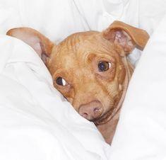 Sweet little Tuna! Tuna Dog, Social Media Stars, Dog Names, Dog Training, Pitbulls, Fur, Puppies, Dogs, Animals
