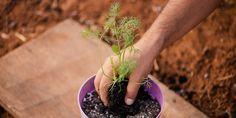 Συμβουλές για άνηθο σε γλάστρα Fruit, Plants, Food, Gardening, The Fruit, Lawn And Garden, Meals, Plant, Yemek