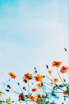 Summer Aesthetic Wallpaper