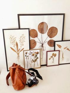 INSPIRED DESIGN: Friday Finds: Pressed Botanicals and an Easy DIY