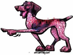 German Shorthaired Pointer Cool Dog