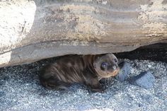 The smiling seal who welcomed a honeymooning couple to the Galapagos. | The 50 Cutest Things That Ever Happened