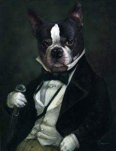 Boston terrier in a tuxedo. Akc Breeds, Terrier Dog Breeds, Boston Terrier Dog, Bull Terriers, Dog Artwork, Dog Paintings, Animal Heads, Dog Portraits, Pet Clothes
