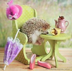Ever wondered what a casual day in the life of a hedgehog looks like? Well, now you can find out, as photographer Elena Eremina has created an adorable series featuring the little spike balls. Happy Hedgehog, Cute Hedgehog, Baby Animals Super Cute, Cute Funny Animals, Diy Crystal Crafts, Pygmy Hedgehog, Cute Hamsters, Little Critter, Tier Fotos