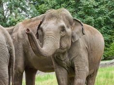 im Tierpark Hagenbeck Elephant, Animals, Holiday Photos, Animales, Animaux, Elephants, Animal, Animais