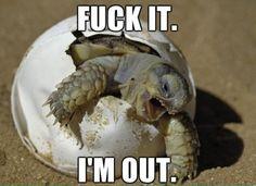 omg this #turtle is pretty cute #meme