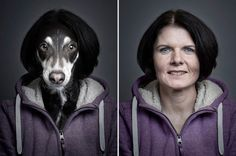 Hilarious Underdogs & Under-cats Photography Project by Sebastian Magnani. |FunPalStudio| Art, artist, artwork,Illustrations, Entertainment, beautiful, creativity, photography, pets, animals, dogs, cats, digital art.