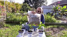 VLOG Update: Planting Moringa Oleifera seeds