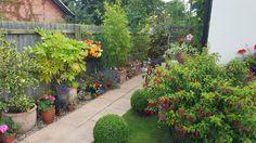 My aunt's beautiful English garden #gardening #garden #gardens #DIY #landscaping #home #horticulture #flowers #gardenchat #roses #nature
