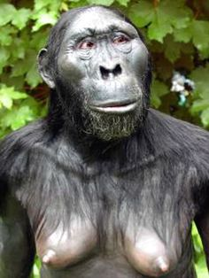 Australopithecus africanus - reconstruction