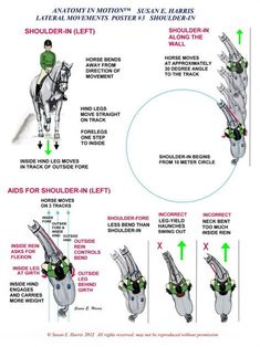 Understanding shoulder in is so key. Not only is it great to train suppleness, i… Understanding shoulder in is so key. Not only is it great to train suppleness, it also forms the basis of other movements. - Art Of Equitation Horse Riding Tips, Horse Tips, Trail Riding, Horse Information, Horse Exercises, Horse Training, Training Tips, Training Exercises, Riding Lessons