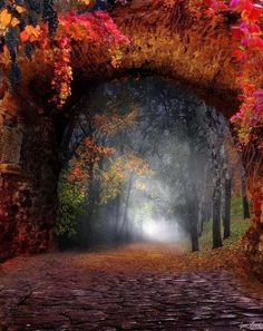 Forest Portal, Moldova