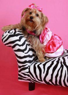 1000 images about moda canina on pinterest vestidos - Lo ultimo en moda ...