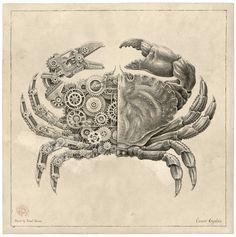 Steeven Salvat -  Mechanical / Biological [Crustacean Study]