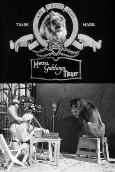 Impressively calm camera crew records Jackie the Lion for MGM studio's roaring lion production logo (1929) (via)