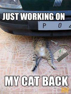 Cat memes funny cats. Cat mechanic