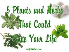 7 Plants and herbs that could save your life.