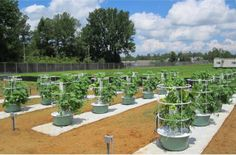 Future Growing® Tower Gardens® at University of Mississippi