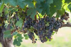 Are you looking for a taste of the good life? Savor the day as you tour the Somerset Wine Trail.