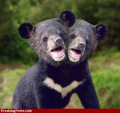 Two-headed baby bear  #bear
