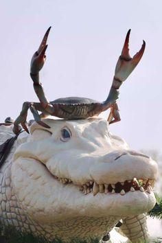 Crab riding an Albino Crocodile Fast Crazy Nature Deals.