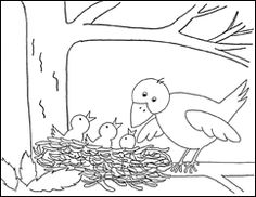 birdspringpat