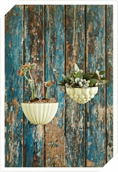 Hanging Jelly Planters | Angus and Celeste