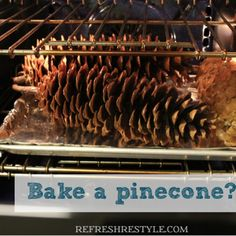 Get rid of insects in your pinecones before you decorate with them! ,,, probably works with acorns too - I hate those icky little things that hatch out of them!