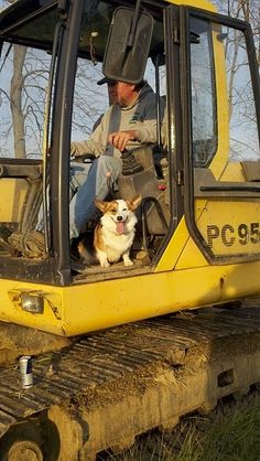 @Pat Brady, maggie would never be able to handle the noise of a tractor! / Perfect work day, heavy equipment and a dog---Malak