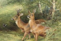 Roebuck - Counted cross stitch pattern in PDF format by Maxispatterns on Etsy