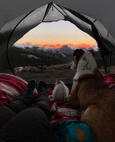 Questo Cane E Questo Gatto Amano Viaggiare Insieme E Le Loro Foto Sono Assolutamente Epiche