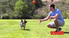 BOMBER, el juguete preferido por los perros! Lánzalo, recupéralo, tira de él, al agua! Fabricado con caucho natural, Bomber cuenta con una capa de  poliéster reforzado para mantener la forma de la bola y de la estructura. Una cámara de aire asegura el rebote de la pelota y permite que flote. Asas extra fuertes! Resistente y duradero, Bomber mantiene su forma mientras practicamos las actividades preferidas por nuestros perros. #Productos #Mascotas #Perros #Juguetes #Bomber #Hagen