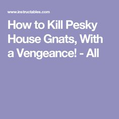 How to Kill Pesky House Gnats, With a Vengeance! - All