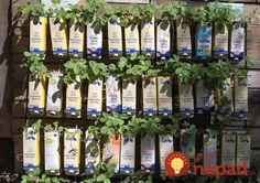 Jumpstart a school garden with repurposed milk & juice cartons . Garden Club, Lawn And Garden, Milk Carton Crafts, Preschool Garden, Bloom Baby, Garden Junk, Garden Art, Vertical Garden Diy, Garden Landscape Design
