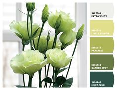 Paint colors from Chip It! by Sherwin-Williams | Photo from: http://parkseed.com/lisianthus-cinderella-lime/p/01209-PK-P1/?green=1bbfe605-002a-ab8da-891d-1429f20f8710