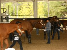 Lining up for the Quarter Horse Show.