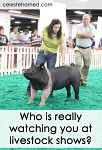 Who is really watching you at livestock shows?
