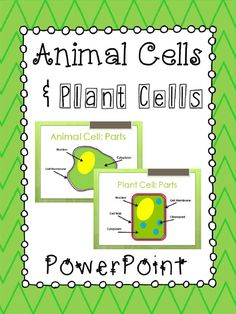 Animal Cells & Plant Cells PowerPoint Presentation.  Compares and describes the function of the major parts of each type of cell.  Aligned with 5th Grade Science standards in Georgia.  100% Editable! Paid