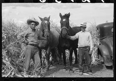 Spanish farmer with hired hand and two horses, Concho, Arizona