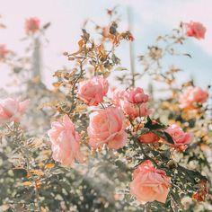 Pin on Flower Power Peach Aesthetic, Spring Aesthetic, Nature Aesthetic, Flower Aesthetic, Retro Aesthetic, What Is My Aesthetic, Aesthetic Pastel, Dark Flowers, Pastel Flowers
