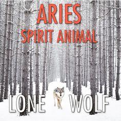 Aries Spirit Animal: Lone Wolf | #aries #spiritanimals